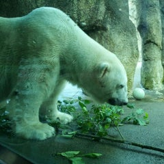 Photo taken at Oregon Zoo by Troy G. on 6/10/2012
