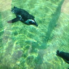 Photo taken at Little Rock Zoo by John K. on 7/7/2012