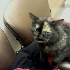 Photo taken at Chelmsford Animal Hospital by Crystal A. on 1/6/2012