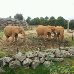 Photo taken at Colchester Zoo by Rich S. on 8/25/2011