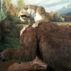 Das Foto wurde bei Page Museum at the La Brea Tar Pits von Enrique d. am 4/29/2011 aufgenommen