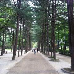 Photo taken at 남이섬 (Nami Island) by 희원 서. on 6/23/2012