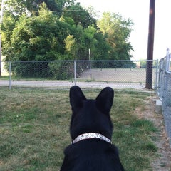 Photo taken at Medina Dog Park by Jennifer on 7/1/2012