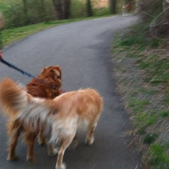Photo taken at Oakton Dog Park by Christina H. on 3/13/2012