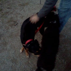 Photo taken at Howard Dog Park by William R. on 11/6/2011