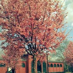 Photo taken at McCarren Park by Amanda G. on 3/13/2012
