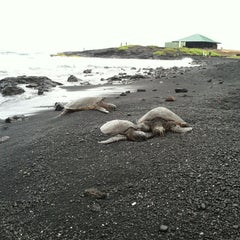 Photo taken at Punalu'u Black Sand Beach by Donna Mc on 8/30/2012