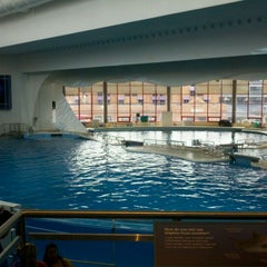 Photo taken at Dolphin Show by Marce V. on 9/1/2012