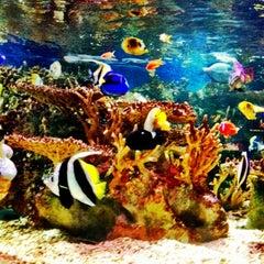Photo taken at New England Aquarium by Asha J. on 8/14/2012