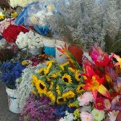 Photo taken at Cementerio de Victoria by Nicole D. on 11/25/2011
