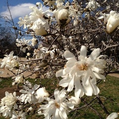 Photo taken at Lincoln Park by Andrew T. on 3/4/2012