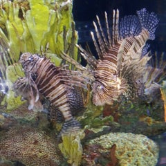 Photo taken at National Aquarium by Patrick H. on 7/21/2012