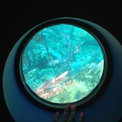 Photo taken at Finding Nemo Submarine Voyage by Jaan on 5/22/2012