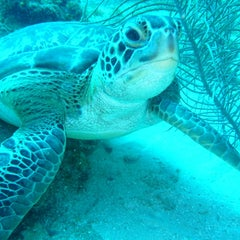 Photo taken at Ricks Diving Locker by Mary D. on 6/8/2012