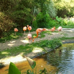 Photo taken at Penguin House at Riverbanks Zoo by Mann C. on 5/26/2012