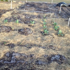 Photo taken at CCCI Community Garden by mLehua on 2/21/2012