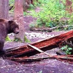 Photo taken at Northwest Trek Wildlife Park by 💜ⓒⓗⓡⓘⓢⓣⓘⓝⓐ . on 5/1/2012