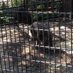 Photo taken at Abilene Zoo by Stephanie M. on 5/28/2012