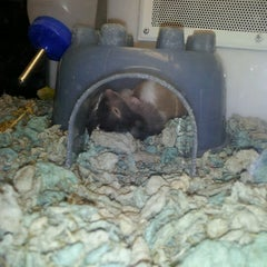 Photo taken at Petco by Esther L. on 6/24/2012