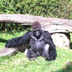 Photo taken at Zoologischer Garten Berlin by Christian H. on 8/25/2012