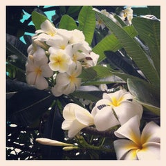 Photo taken at Discover Hawaii Tours by DHT S. on 6/13/2012