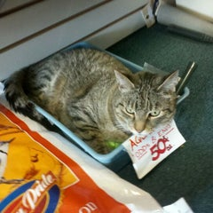 Photo taken at Smiley's Pet Pad by george h. on 6/17/2012