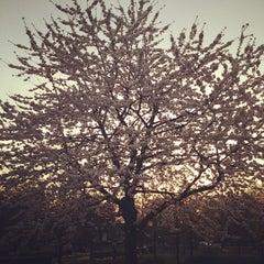 Photo taken at Haven Green by Carmen M. on 3/29/2012