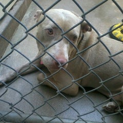 Photo taken at Hawaiian Humane Society by Maine W. on 6/30/2012