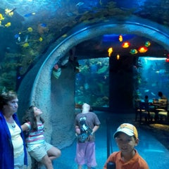 Aquarium Restaurant - Nashville, TN
