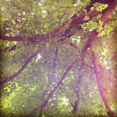 Photo taken at Phelps Grove Park by Tim S. on 5/28/2012