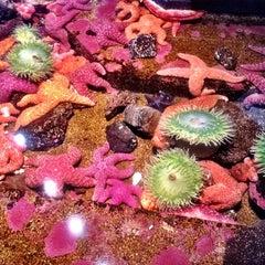 Photo taken at Oregon Coast Aquarium by Kate K. on 7/30/2012