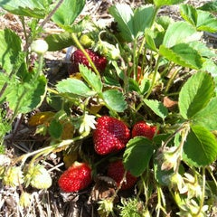 Photo taken at Glover Farms by Teresa L. on 5/28/2012