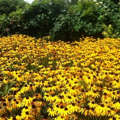 Photo taken at Fenway Victory Gardens by Rachel L. on 8/24/2012