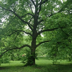 Photo taken at Arnold Arboretum by Lindsey C. on 5/11/2012