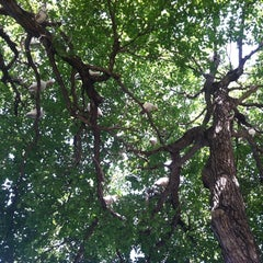 Photo taken at John Prince Park - Custard Apple Trail by Brittany on 7/28/2012