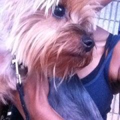 Photo taken at Atlanta Humane Society by Joscelin B. on 8/4/2012