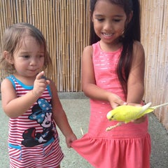 Photo taken at Gatorland - Aviary by Junior H. on 8/25/2012