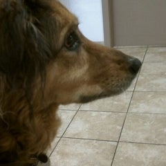 Photo taken at Shiloh Veterinary Hospital Manchester by Andréa C. on 4/12/2012