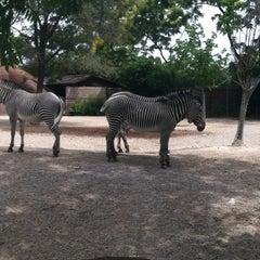 Photo taken at Saint Louis Zoo by Cherí L. on 6/3/2012