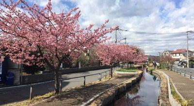 Photo of Trail 小関橋跡 at 高津区明津7, Kawasaki 213-0024, Japan