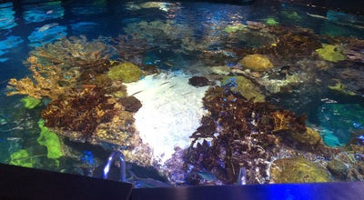 Photo of Aquarium Top Of The Tank at Boston, MA, United States