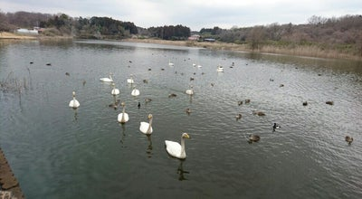 Photo of Lake 羽田沼 at Japan