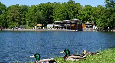 Photo of Lake Pelzmühlenteich at Pelzmühlenstraße, Chemnitz 09117, Germany
