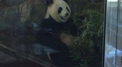 Photo of Arts and Entertainment Panda Enclosure at Adelaide Zoo, Adelaide, SA 5000, Australia