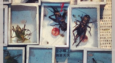 Photo of Market Bird, Flower And insect Market at 黄浦区西藏路 South Xizang Rd, 上海市, 上海, China
