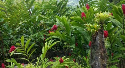 Photo of Botanical Garden Jardin de Balata at Route De Balata, Fort-de-France 97200, Martinique