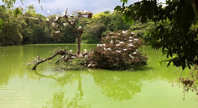 Photo of Lake Parque De Las Garzas at Colombia