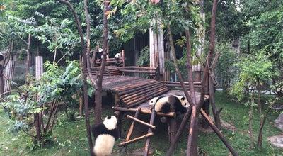 Photo of Park 大熊猫月亮产房 at China