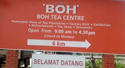 Photo of Botanical Garden Ladang Teh Boh at Malaysia