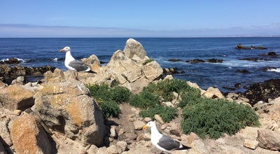 Photo of Beach Paciic Grove Shoreline Parkway Marine Refuge at Oceanview Road, Pacific Grove, CA, United States
